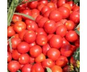 Помидоры красные 1 кг