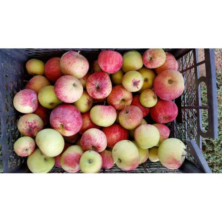Яблоко 1 кг
