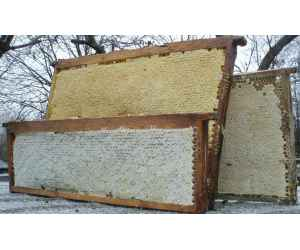 СЗ Мёд в сотах (рамочный), 1 кг