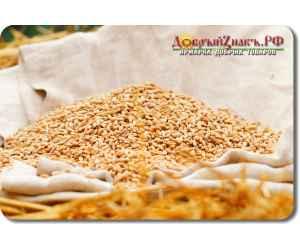 Пшеница для проращивания (БИО), на вес